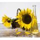Измерители масличности семян